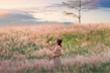 Đồi cỏ hồng đẹp mơ màng nằm giữa núi rừng Gia Lai hút hồn du khách