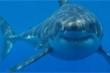 'Giác quan thứ 6' của loài cá mập sống trong miệng núi lửa đang hoạt động
