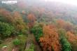 Chùm ảnh: Đẹp nao lòng những tán phong thay màu mùa lá đổ ở Hải Dương