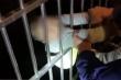 May mắn kỳ lạ: Bé trai 2 tuổi rơi từ tầng 13, hàng xóm chụp được