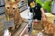 Dân mạng mê tít chú mèo đeo 'thẻ căn cước' tự ra cửa hàng mua đồ