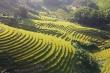 Video: Ngắm ruộng bậc thang vàng rực mùa lúa chín ở Quảng Ninh