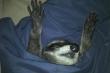 Ảnh: Những pha ngủ vùi hài hước 'khó đỡ' của thú cưng