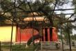 Cận cảnh cây thông cổ có thế lạ cạnh nơi thờ tự các vị vua triều Nguyễn