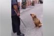 Chú chó làm vẻ mặt đáng thương để không bị chủ mắng