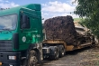 CSGT chặn xe đầu kéo chở cây đa khổng lồ cao 23m từ Đắk Lắk ra chùa ở Ninh Bình