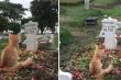 Chú mèo gây bão mạng vì lòng trung thành với chủ
