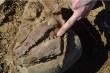 Phát hiện thú vị về loài cá kiếm 100 triệu tuổi ở Úc