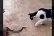 Video: Con rắn đen đủi nằm trong miệng ếch vẫn bị mèo trêu ghẹo