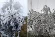 Sơn La: Rừng cây ở Tà Xùa đóng băng trắng muốt trong cái rét 3 độ C
