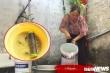 Hàng trăm hộ dân Hà Nam bức xúc bỏ tiền mua nước sạch nhưng phải dùng nước bẩn