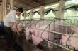 Thịt lợn giảm giá mạnh, mấy triệu hộ dân lại lo lắng
