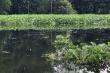 Sông Cái Lớn và kênh rạch ở Hậu Giang hôi thối, đen ngòm: Vì đâu nên nỗi?
