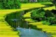 'Mùa vàng Tam Cốc' ngắm trọn từ Hang Múa, kỳ quan độc đáo bậc nhất Ninh Bình