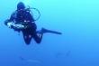 Video: Rùng mình cảnh nữ thợ lặn bị hàng trăm con cá mập vây quanh