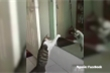 Clip: Mèo 'cà khịa' với bóng mình trong gương