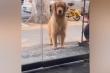 Clip: Chú chó giận dỗi vì không được đi chơi