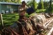 Bắt được cá sấu quái vật nặng 350 kg