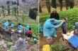 Dân mạng đua nhau chia sẻ ảnh y bác sĩ leo nương xét nghiệm COVID-19 cho dân
