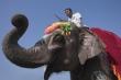 Clip: Voi bị ép đá bóng, chọc chảy máu tai trong lễ hội ở Nepal
