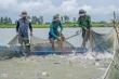Campuchia hủy lệnh cấm nhập khẩu 4 loại cá từ Việt Nam