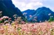 Lễ hội hoa tam giác mạch Hà Giang 2019: 'Sắc hồng cao nguyên đá'