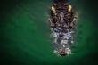 Giành lại thi thể ngư dân Indonesia trong hàm cá sấu