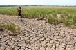Cảnh báo hạn hán nghiêm trọng mùa khô 2019 - 2020 tại ĐBSCL