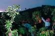 Video: Nông dân tâm dịch Bắc Giang thu hoạch vải thiều từ 3 giờ sáng