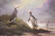 Cặp chim 'song sinh' nhưng sống cách nhau hơn 30 triệu năm