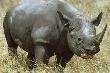 Phát hiện xác động vật quý hiếm nhất thế giới tại VN