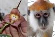 Độc đáo, hoa phong lan mặt khỉ ở Nam Mỹ
