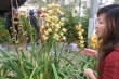 Kinh nghiệm để có những giò phong lan tuyệt đẹp