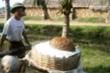 Nguy cơ xóa sổ nghề muối ở Thanh Hóa