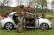 30 chú khỉ đầu chó được phân công 'kiểm tra' nội thất Hyundai i30