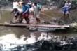 Clip: Hàng chục người vây bắt cá sấu 'khổng lồ'