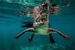 Cận cảnh hàm răng cá sấu nước mặn như khủng long thời tiền sử