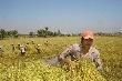 Miễn, giảm thuế đất nông nghiệp thêm 10 năm