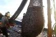 Hàng ngàn tàu giã cào tận diệt hải sản ven bờ