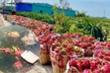 Dịch corona: Thanh long rụng đầy vườn, nông dân ngậm ngùi đổ cho cá ăn