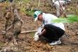 Honda thực hiện ngày hội trồng rừng ở Bắc Kạn