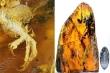 Phát hiện xác chim trong thạch hổ phách quý hiếm 100 triệu năm tuổi