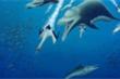 Loài cá heo cổ đại hoạt động như cá voi sát thủ
