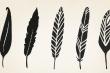 Trắc nghiệm vui: Chiếc lông vũ yêu thích tiết lộ điều gì về bạn?