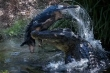 Cá sấu già hất tung lợn rừng lên không trung rồi làm thịt