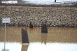 Khu bảo tồn bãi cọc Cao Quỳ ở Hải Phòng 'lột xác' sau gần 1 năm phát lộ