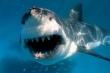 Chiếc vòng trang sức trong bụng cá mập hé lộ manh mối vụ mất tích bí ẩn