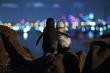 Câu chuyện cảm động sau bức ảnh cặp cánh cụt mất bạn đời an ủi lẫn nhau