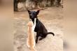 Chó 'phê lòi' khi được mèo massage mặt