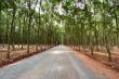 Lùm xùm con đường đi vào rừng cao su: Huyện nói không sai, do dân 'hiểu lầm'